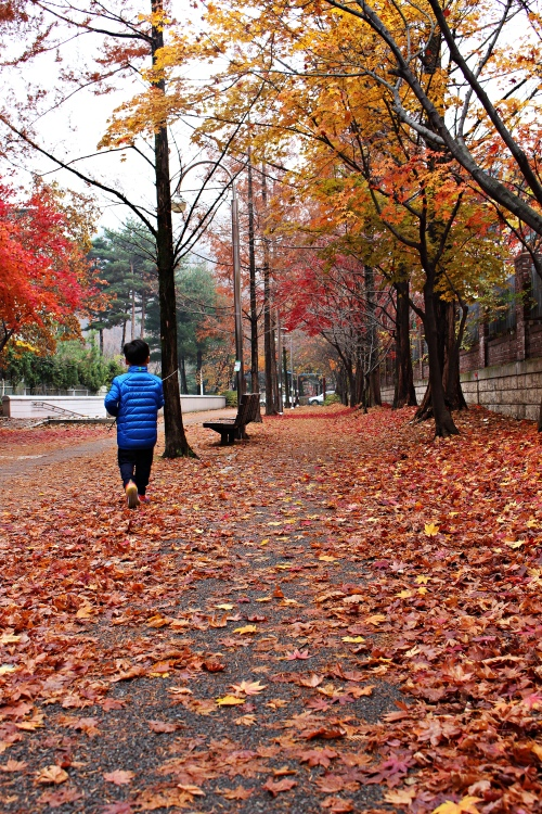 낙엽과 민이
